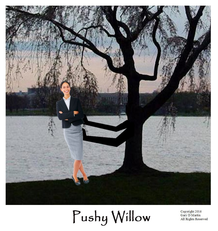 aapushy willow